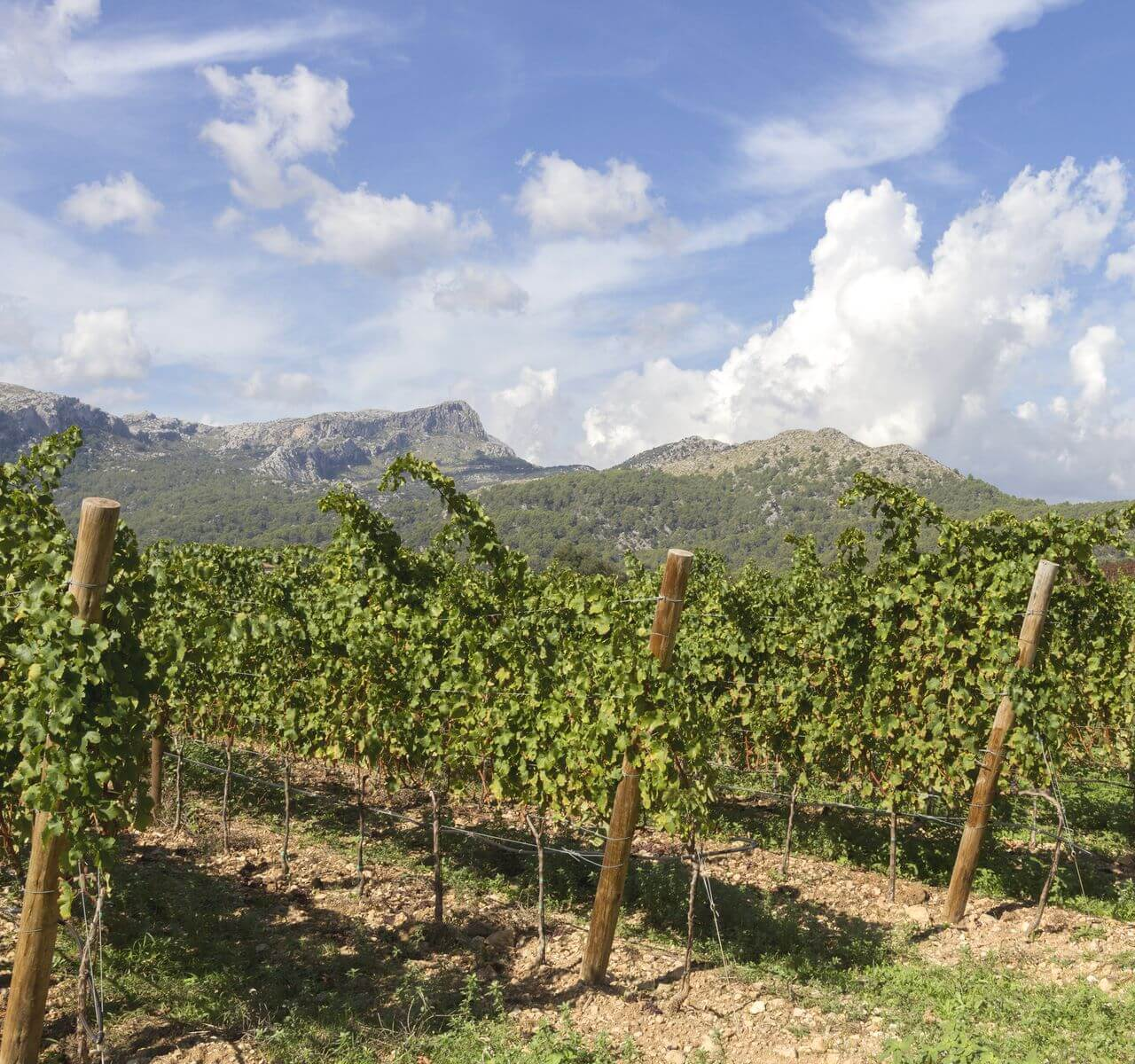 Bodega Jardi Lavica Mallorca