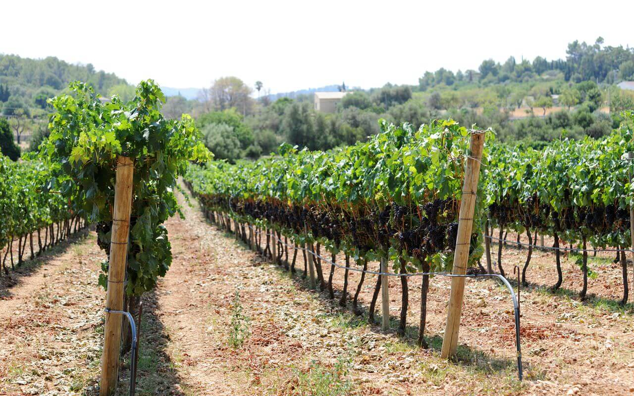Das Weingut - Bodega Jardi Lavica