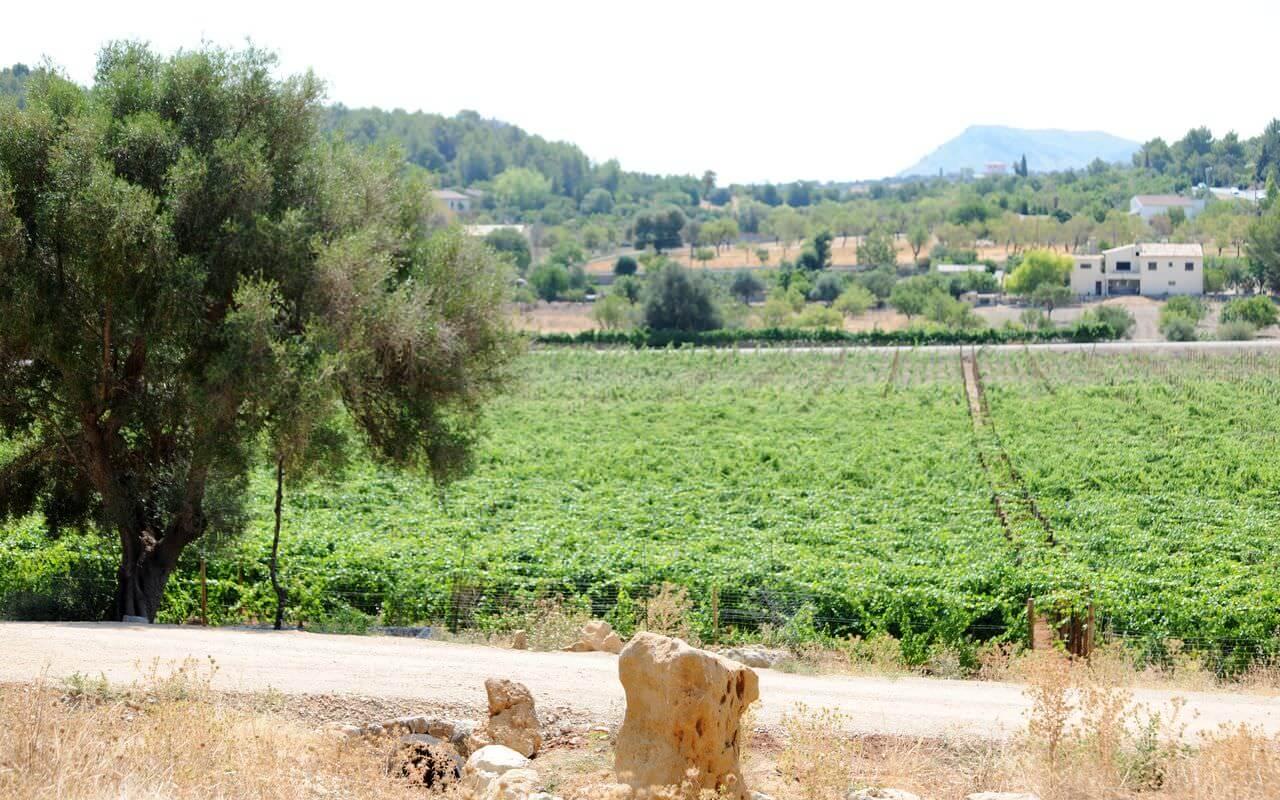 Das Weinbauunternehmen Jardi Lavica
