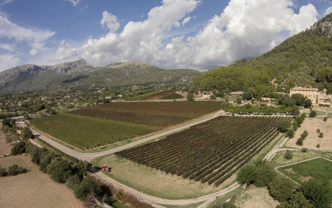Jardi Lavica Panorama